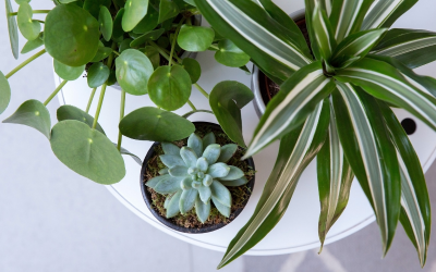 Plants for Kids' Rooms